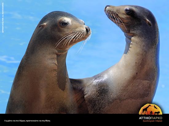 Athene_Attica_Zoo.jpg