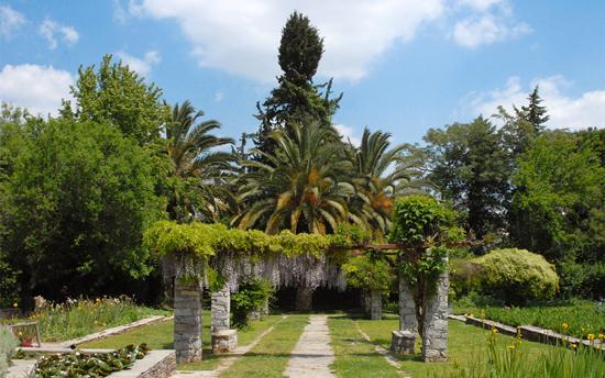 Athene_Chaidari_Botanic.jpg