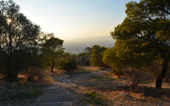 Athene_evening-stroll-avond